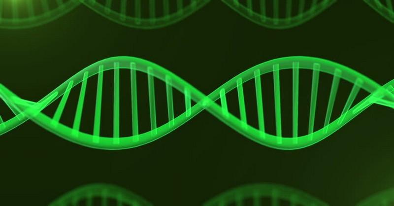 Nová veda: DNA začína ako kvantová vlna