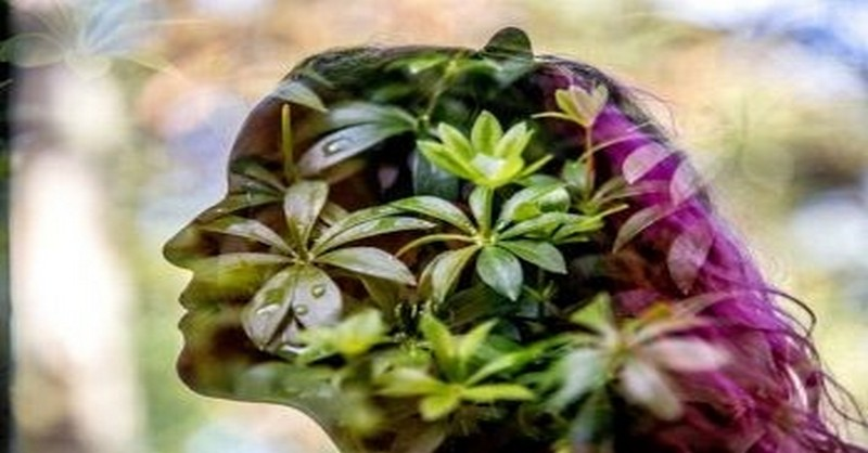 Tieto tri rastliny aktivujú duchovné schopnosti, prehlbujú uvedomenie a výrazne dobíjajú životnú energiu
