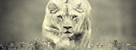 10 duchovných zvierat a ich časté vonkajšie znaky, ktoré vypovedajú o našom vnútri