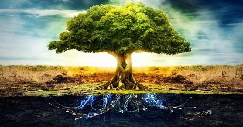 Astrológia keltských druidov: Zistite, aké je Vaše znamenie podľa keltského stromokruhu