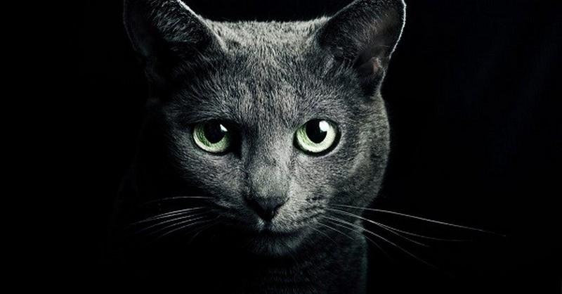 Mačky – skutočne majú schopnosť ochrániť nás a náš domov pred duchmi a zlou energiou?