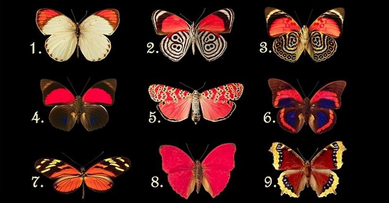 Vyber si jedného motýľa, aby si objavil, aké myšlienky skrýva tvoje podvedomie