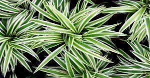 12 izbových rastlín, ktoré najlepšie čistia vzduch v našej domácnosti