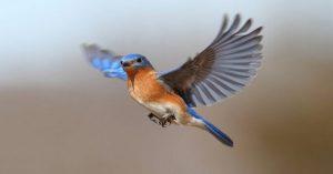 Vedci konečne prišli na to, v čom spočíva neuveriteľne presný orientačný zmysel vtákov – vidia magnetické polia Zeme