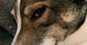 Psy naozaj dokážu vycítiť zlého človeka – už to potvrdili aj vedci
