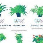 18 izbových rastlín, ktoré sú podľa NASA najlepšími čističmi vzduchu v domácnosti